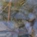 Fond d'eau trouble