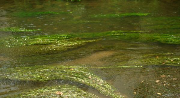 Echarpes d'herbes d'eau
