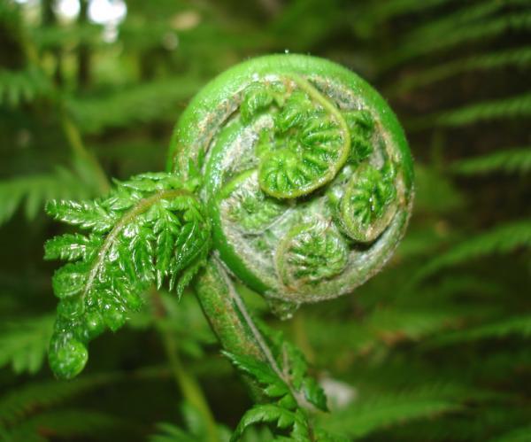Plante mandala