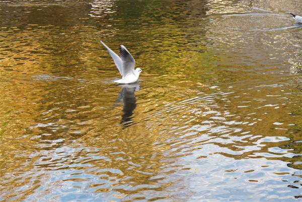 Avant l'envol de l'oiseau