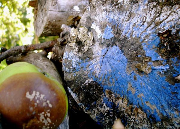 Nature : alchimie bleue