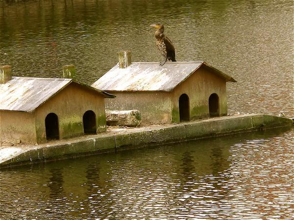 L'oiseau attend ...