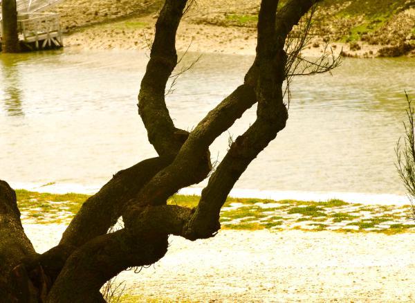 Impression de branche d'arbre