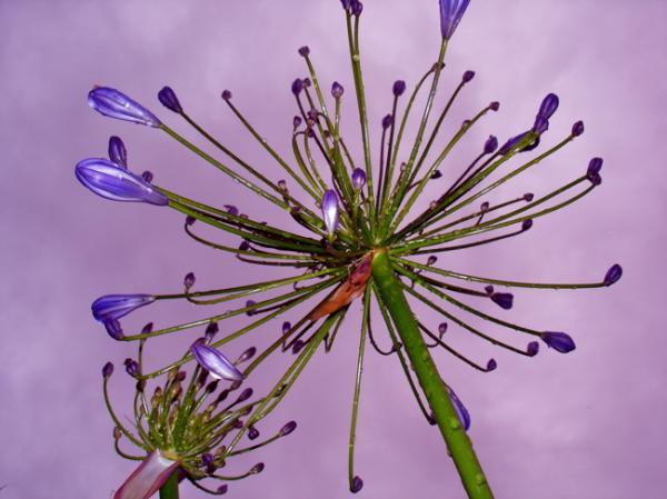 Fleur bijou