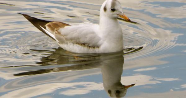 Oiseau en miroir