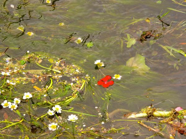 Fleur dans l'ordure