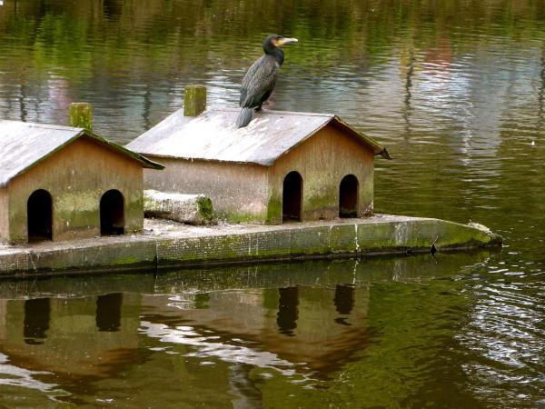 Oiseau propriétaire